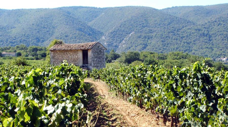 Propriétés agricoles & viticoles